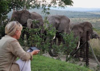 A l'occasion de la Journée mondiale de l'éléphant, célébrée les 12 août, les préservateurs de la faune se sont engagés lundi à Nairobi (Kenya), à intensifier les mesures anti-braconnage et à faire connaître le sort des éléphants en Afrique.