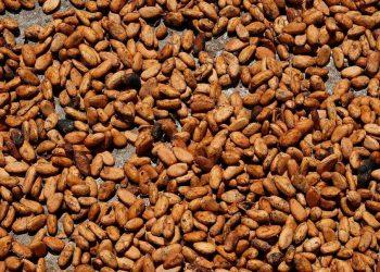 SIA 2018: sans le cacao ivoirien, 85 entreprises et 2000 artisans menacés en France