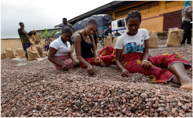 Des ouvrières triant les fèves de cacao chez un exportateur à Abidjan le 3 juillet 2019 ( AFP)