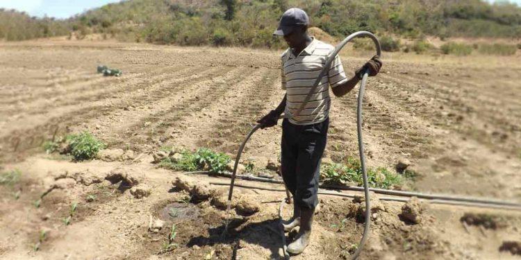Des milliers de producteurs du Niger ont la garantie de pouvoir disposer des semences pour la prochaine campagne agricole.